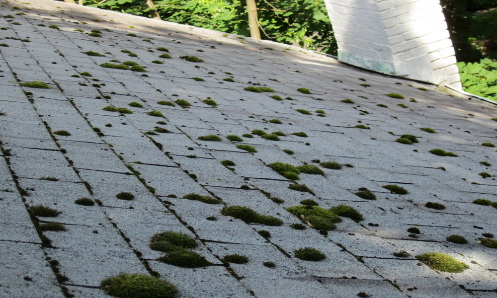 growth roof power washing